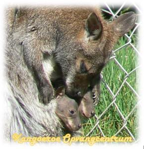 kangoeroe opvangcentrum